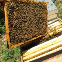 Wanted bee farm to take over in Saskatchewan